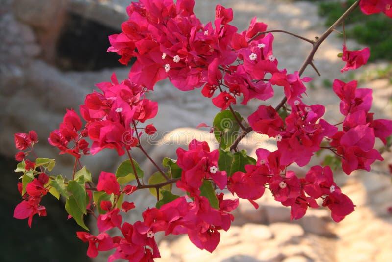 kwiaty egiptu zdjęcie royalty free