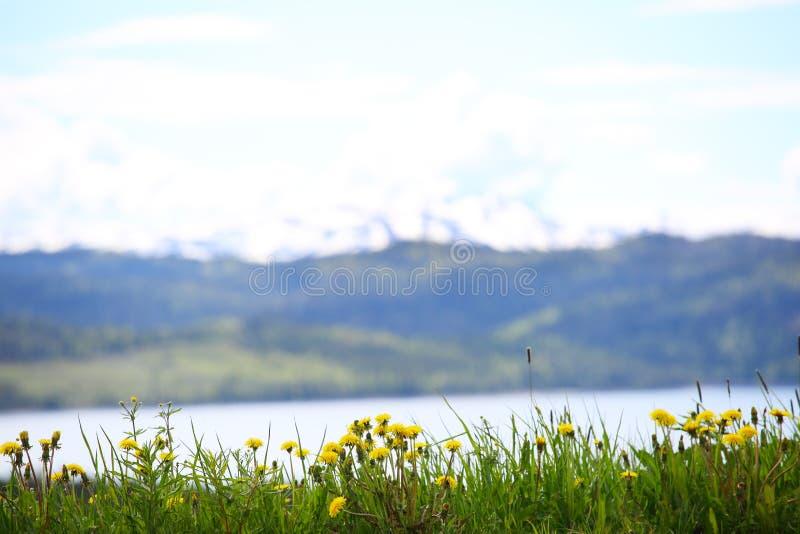 Kwiaty, góry i fjord, obraz stock