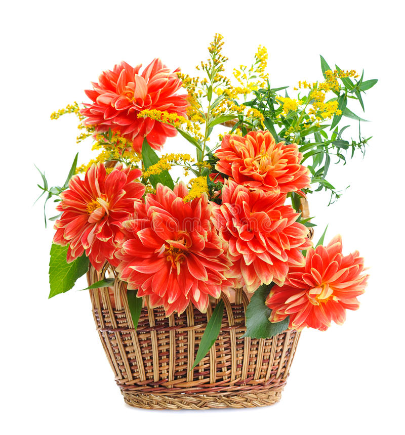 Kwiaty Georgina fotografia stock