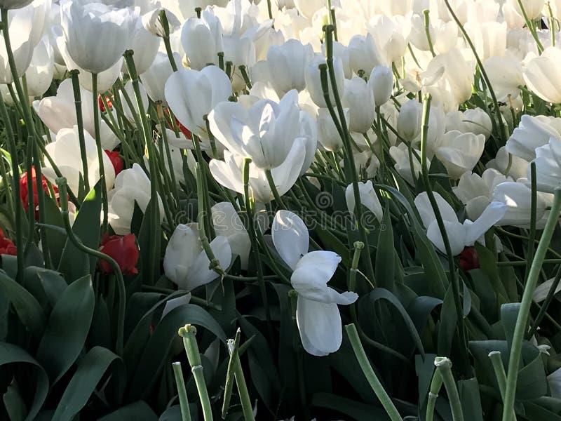 Kwiaty, Gulhane park, 2018 obraz stock