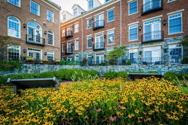 Kwiaty i budynki mieszkaniowi w Aleksandria, Virginia fotografia stock