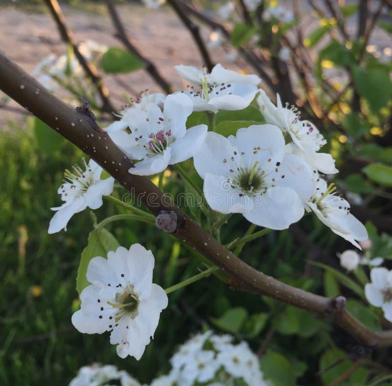 Kwiaty i materiał podczas coś w rodzaju wiosna dnia Pewna przyczyna ja był gorący zdjęcie royalty free