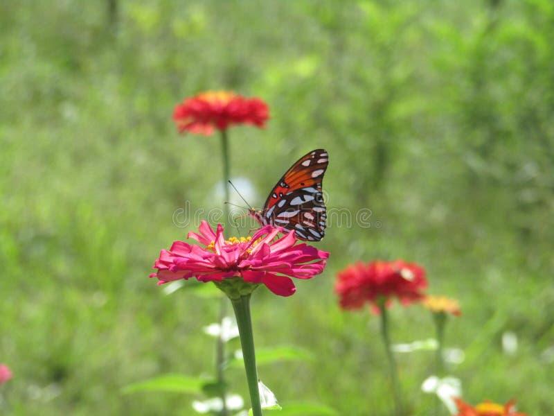 Kwiaty i motyl obraz stock