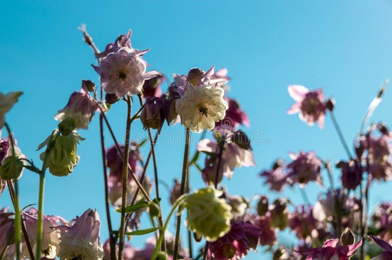 Kwiaty i niebieskie niebo zdjęcie royalty free