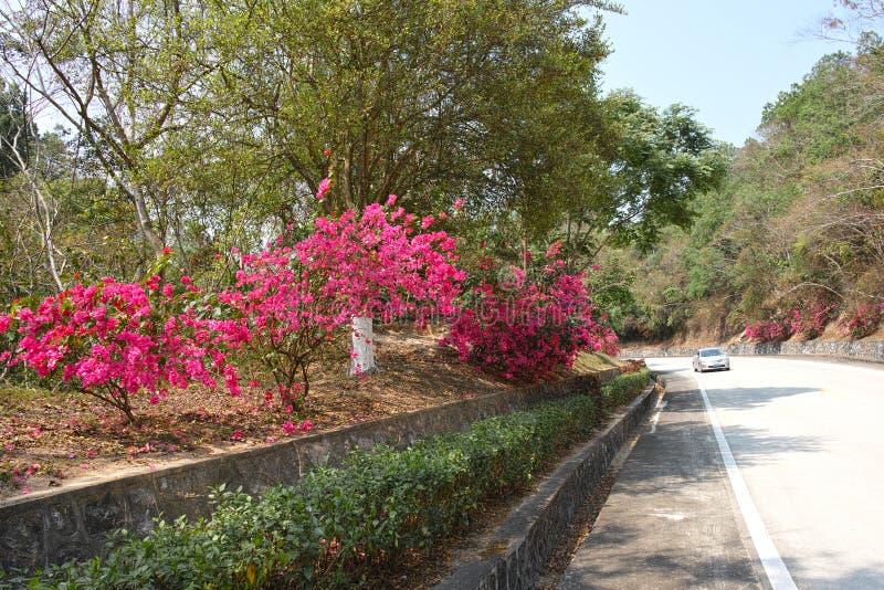 Kwiaty i trafficway fotografia stock