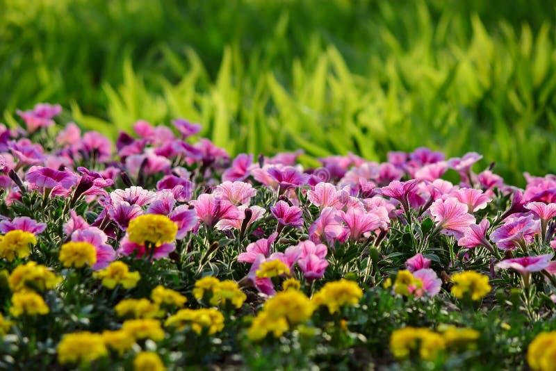 Kwiaty i trawa zdjęcie royalty free