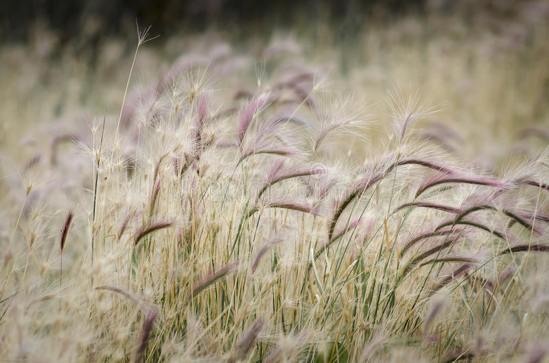 Kwiaty i trawa w El Calafate, Argentyna obrazy royalty free