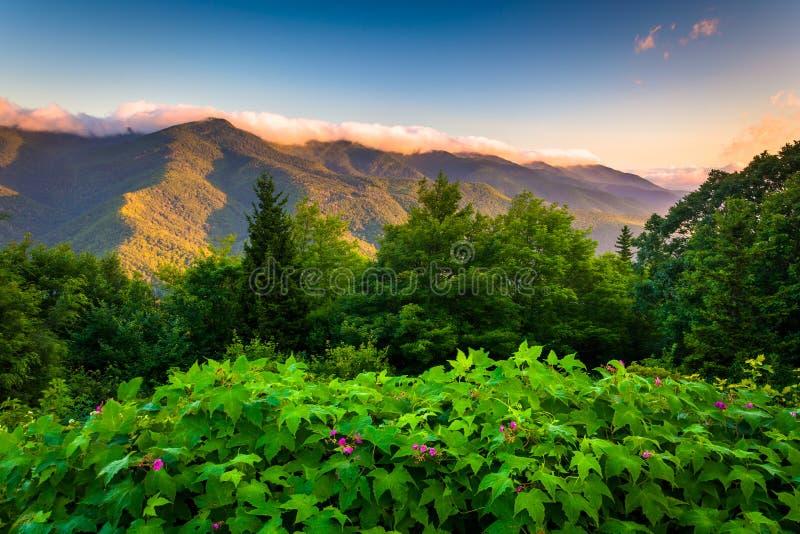 Kwiaty i widok Błękitna grań przy wschodem słońca widzieć od Mt, MIT obrazy royalty free