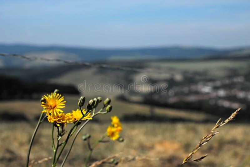 Kwiaty i wieś fotografia stock