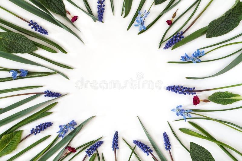Kwiaty i zieleń liście na białym tle Botaniczny ramowy skład z kopii przestrzenią zdjęcia stock