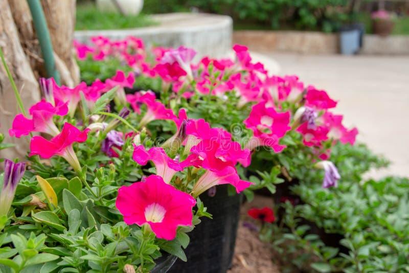 Kwiaty kwitnie w ranku z wiele kolorowa zieleń opuszczają zdjęcie royalty free