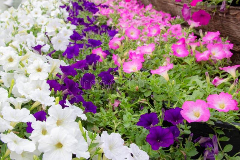 Kwiaty kwitnie w ranku z wiele kolorowa zieleń opuszczają fotografia royalty free