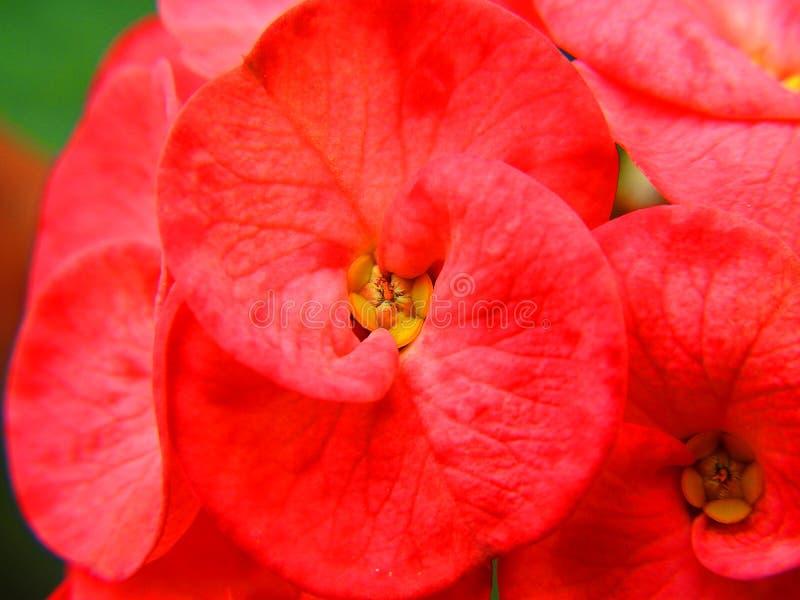 Kwiaty kwitnie zakończenie up obrazy stock