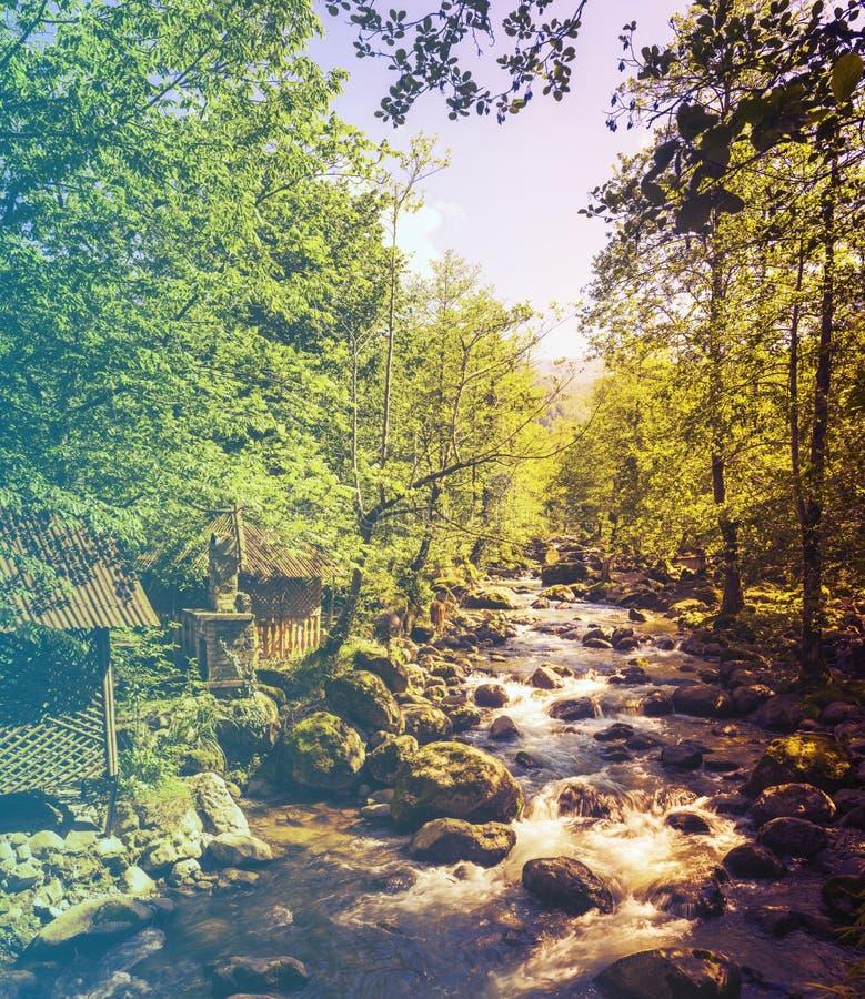 Download Kwiaty Lasu łóżko Zielonych Roślin źródła światła Słonecznego Drzew Bagażnika Drzewny Filtrujący Wizerunek: Ciepły Krzyż Przetwar Zdjęcie Stock - Obraz złożonej z wieś, krzyż: 57667914