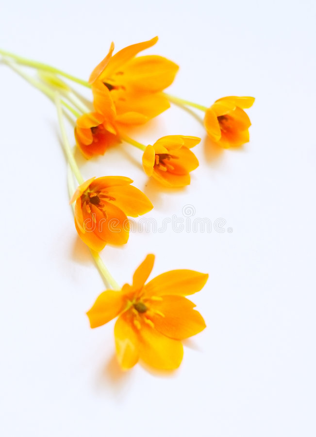 kwiaty małą wiosny fotografia stock