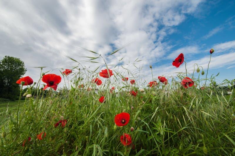 Kwiaty miewają skłonność niebo zdjęcie royalty free