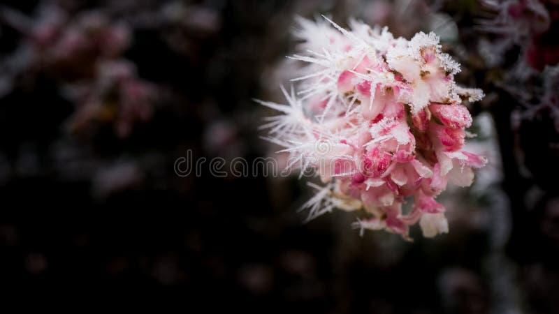 kwiaty, mrożone zdjęcie stock