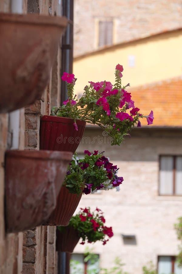 Kwiaty na ścianie zamieszkany dom obraz stock