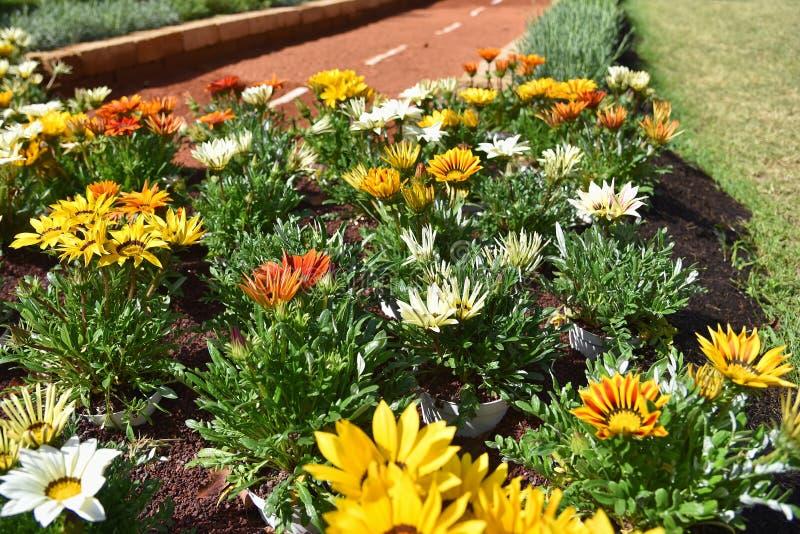 - kwiaty na drodze Genova Nervi, Euroflora, Włochy - obrazy royalty free