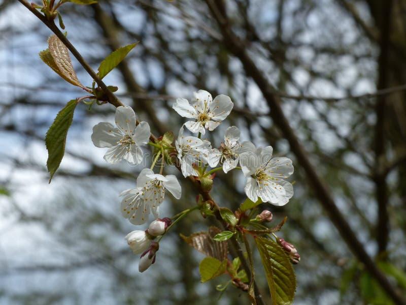 Kwiaty na drzewie obrazy royalty free