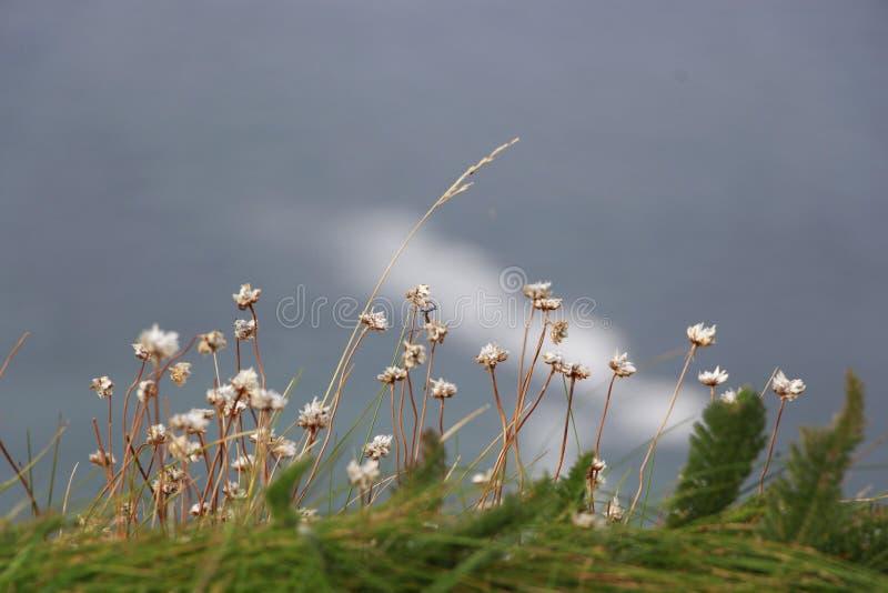 Kwiaty Na The Edge fotografia stock