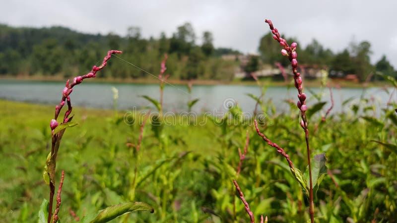 Kwiaty na jeziorze 2 fotografia royalty free