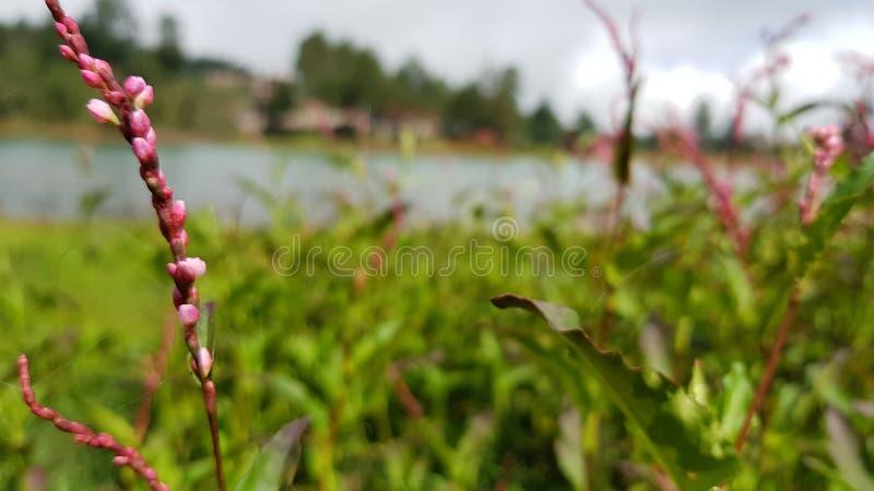 Kwiaty na jeziorze 2 zdjęcia royalty free