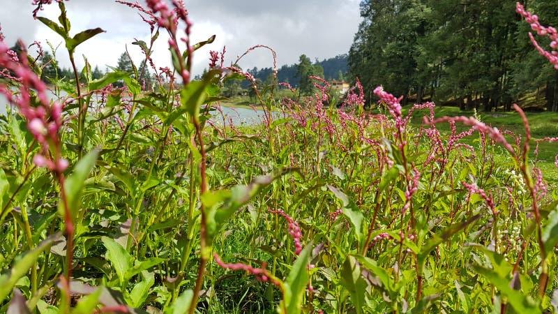 Kwiaty na jeziorze 4 zdjęcia stock