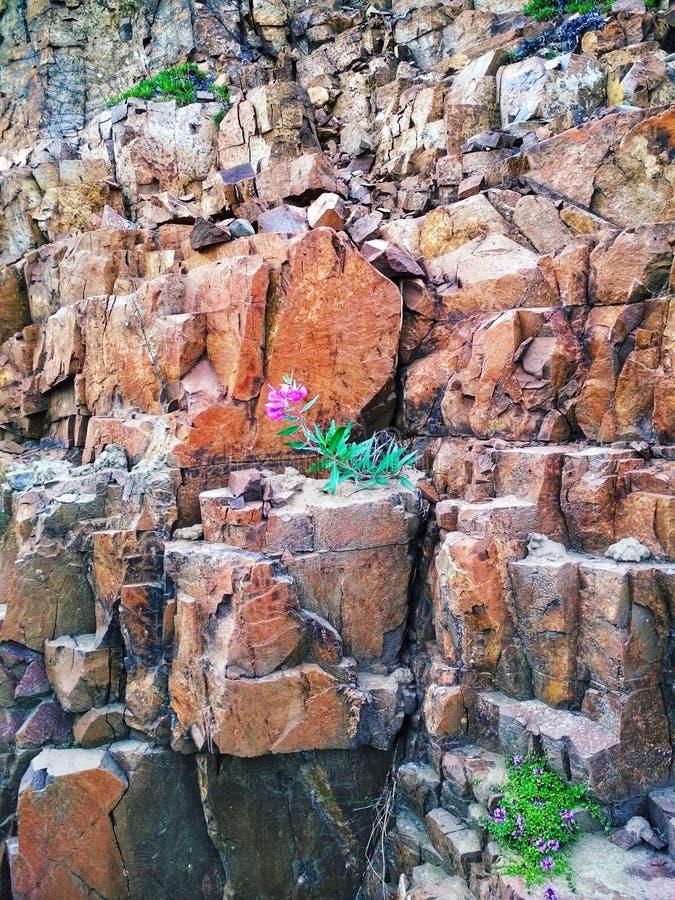Kwiaty na kamieniach fotografia stock