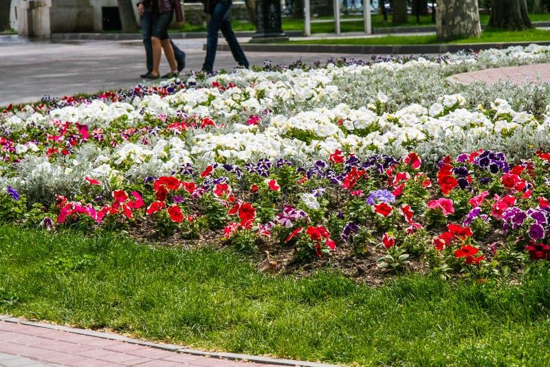 Kwiaty na kwiatów łóżkach na bulwarze zdjęcia royalty free