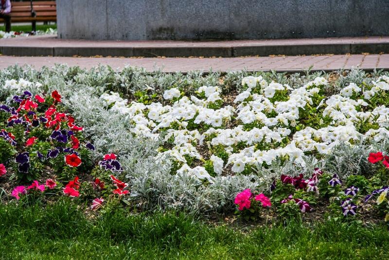 Kwiaty na kwiatów łóżkach na bulwarze obraz stock