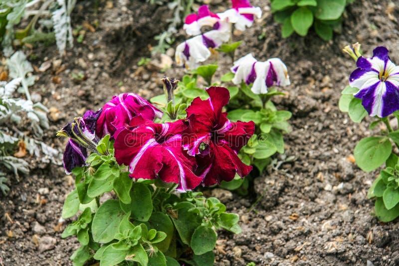 Kwiaty na kwiatów łóżkach na bulwarze zdjęcie royalty free