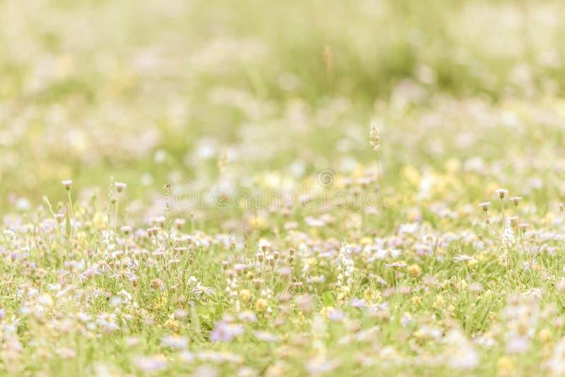 Kwiaty na obszarze trawiastym obraz royalty free