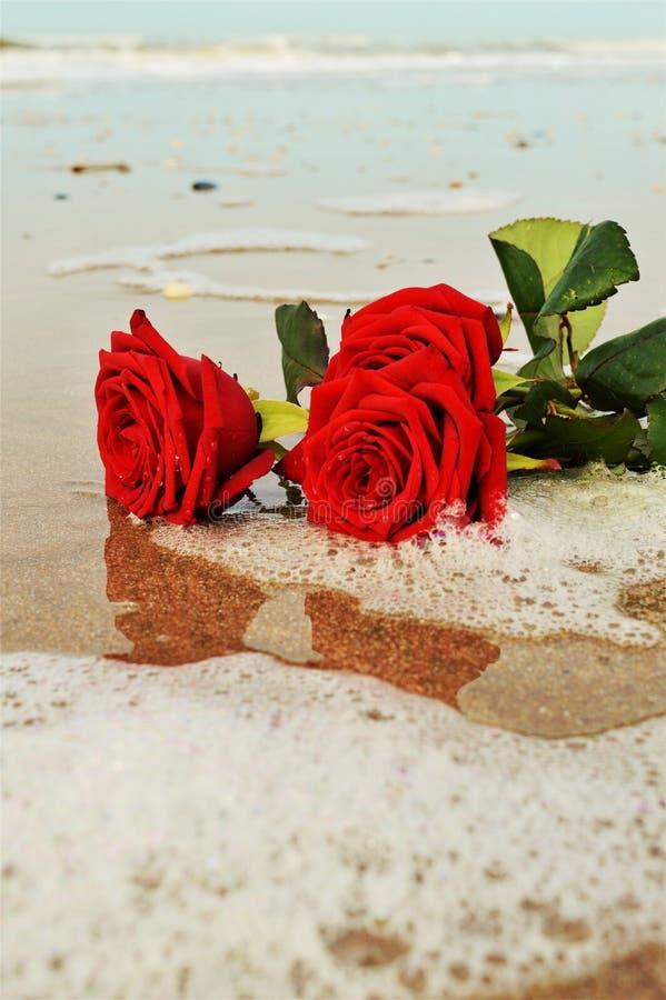 Kwiaty na piasku zdjęcia stock