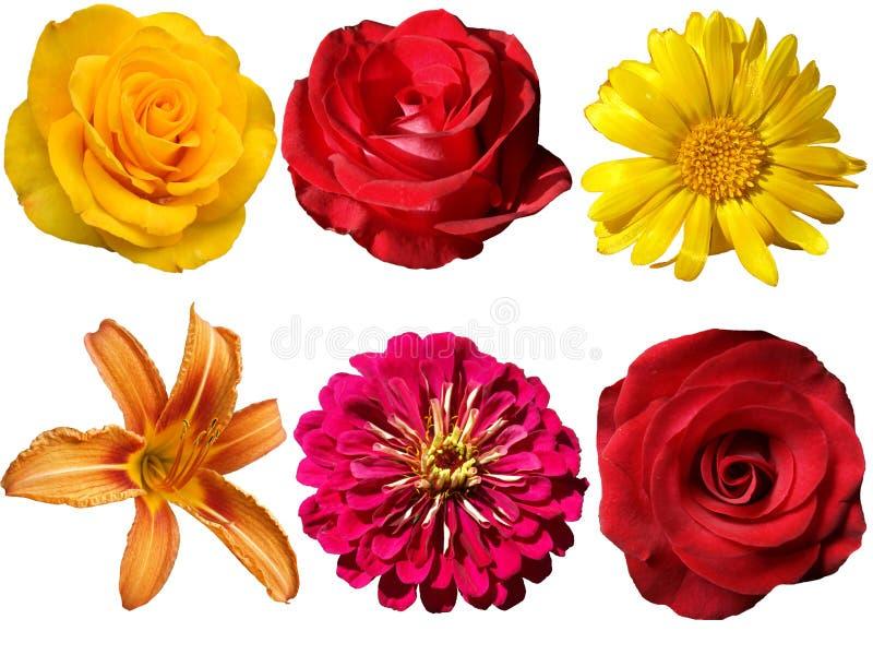 Kwiaty na przejrzystym tle obraz stock