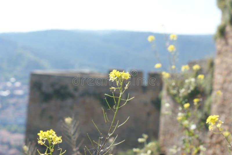 Kwiaty na ramparts Kastamonu kasztel zdjęcie royalty free