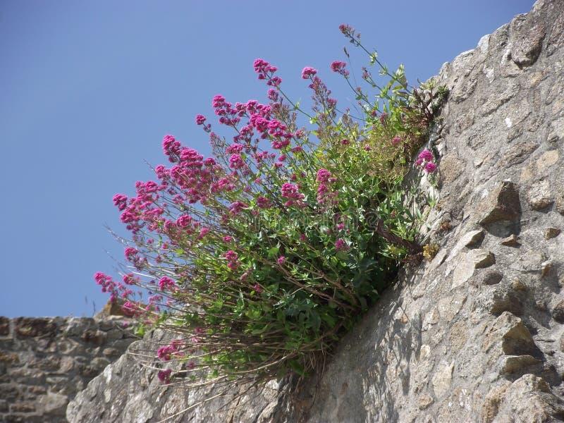 Kwiaty na skale fotografia stock