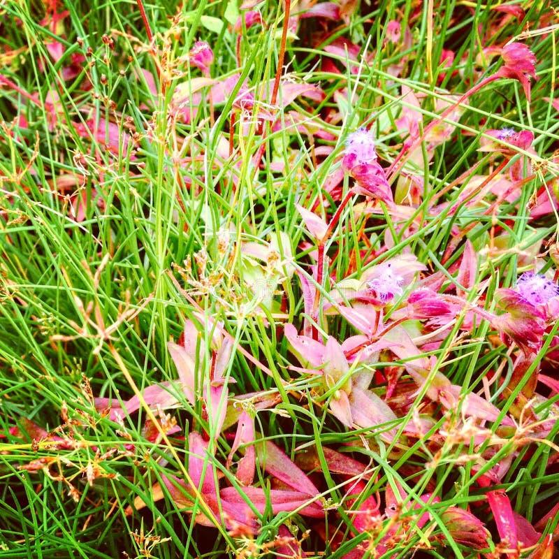 Kwiaty na szczyciefal tg0 0n w tym stadium góry fotografia stock