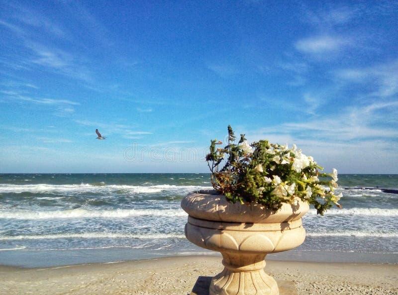 kwiaty na tle morze obrazy royalty free