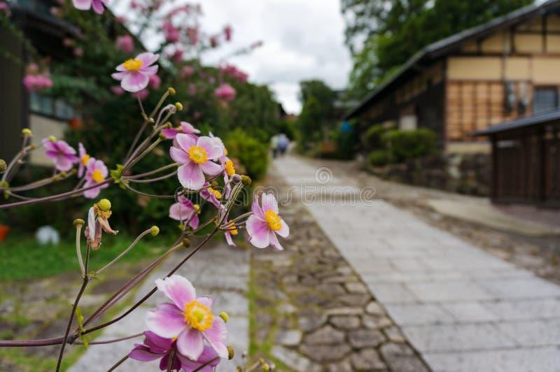 Kwiaty na ulicie Magome pocztowy miasteczko zdjęcia royalty free