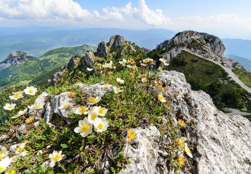 Kwiaty na Wielkim Rozsutec wzgórzu obrazy stock