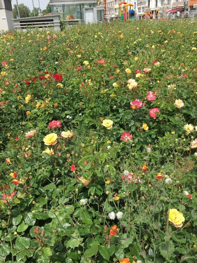 kwiaty na wiosnę fotografia stock