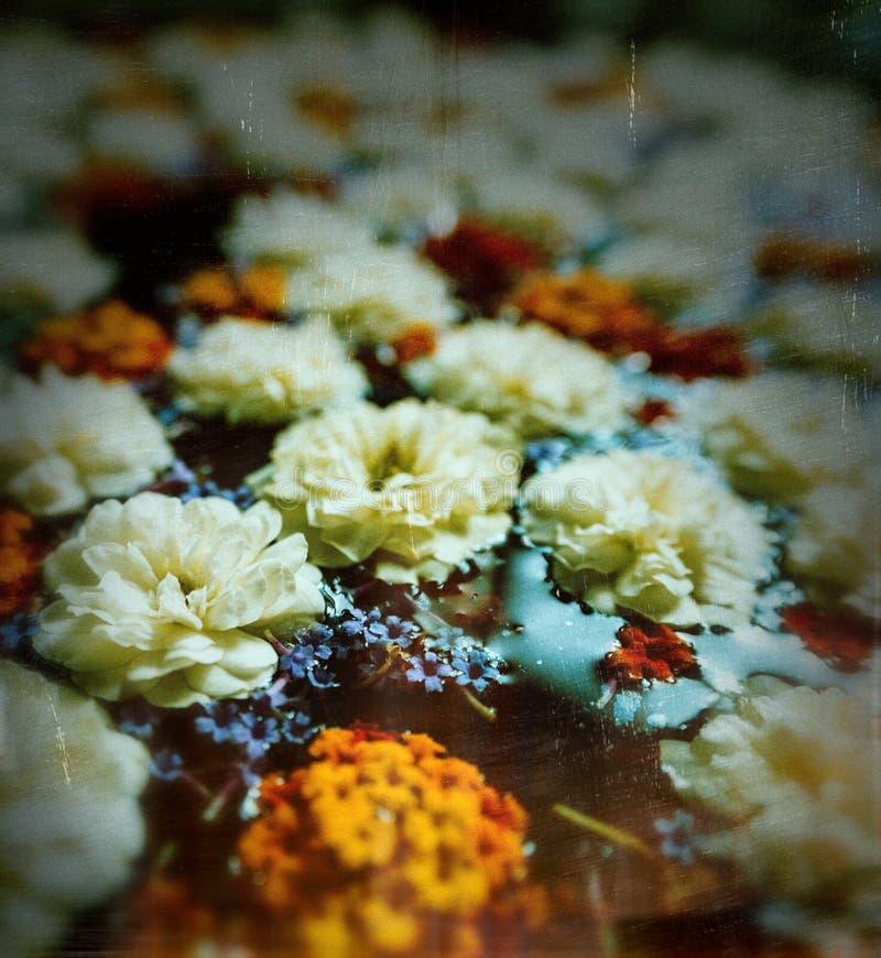 Kwiaty na wodzie zdjęcia royalty free