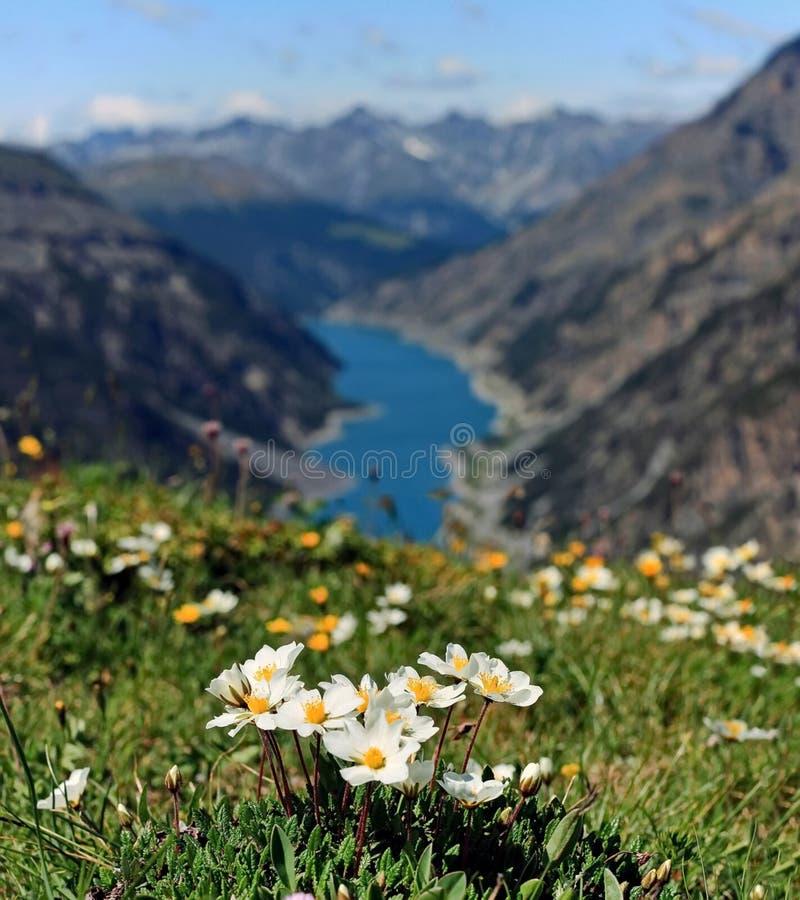 Kwiaty nad chmury Jeden volcanoes Kamchatka Volcanoes Kamchatka fascynują zdjęcia royalty free