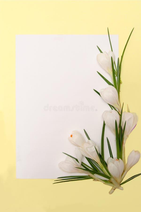 kwiaty obramiają wiosny fotografia stock