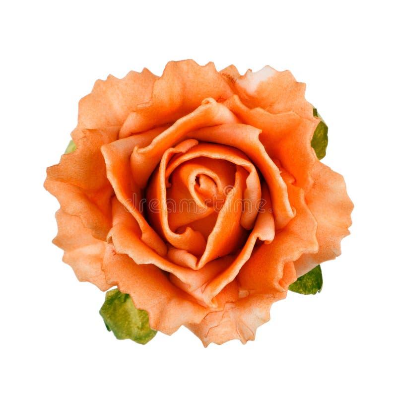 Kwiaty odizolowywający na bielu obraz royalty free