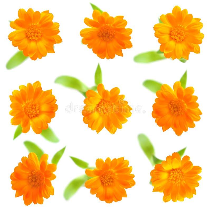 kwiaty odizolowywali kolor żółty dziewięć obrazy royalty free