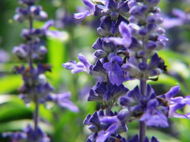kwiaty ogrodu tła niebieska green obrazy stock