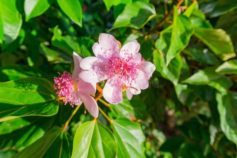 Kwiaty piękny Guadeloupe obraz stock