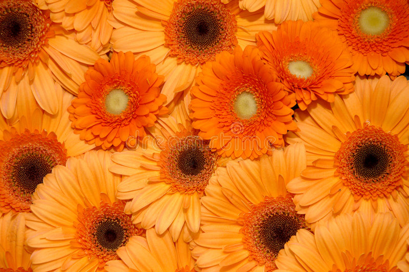 kwiaty pomarańczy fotografia royalty free